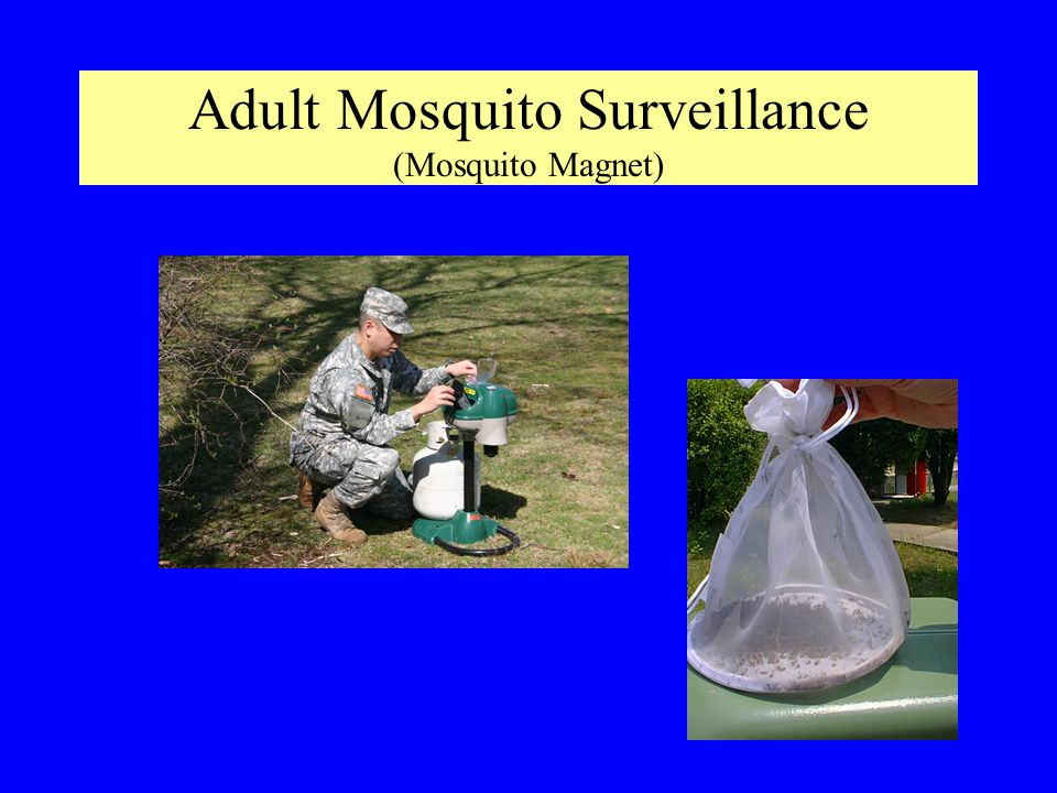 Adult Mosquito Surveillance (Mosquito Magnet)