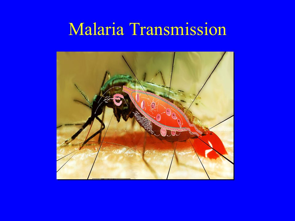Malaria VecTOR Kit Materials Required but Not Provided: –Mosquito keys –Mosquito Collection/Pooling Log Sheet –Permanent Marker –Timing Device –Wash bottle –Motorized grinder (optional)
