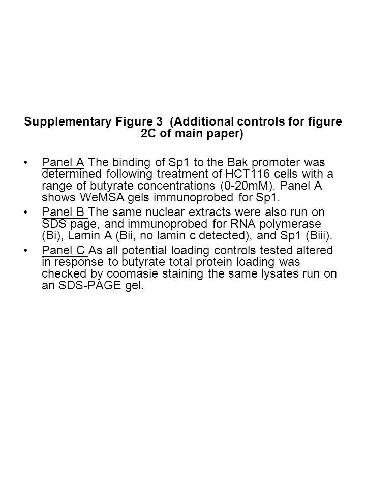 Sp1 Shift 90kDa Lamin A RNA Polymerase II 75kDa 250kDa Sp1 A B i ii 0 0.5 15 1020 mM Butyrate 100kDa 75kDa 50kDa 37kDa 25kDa iii C Supplementary figure 3