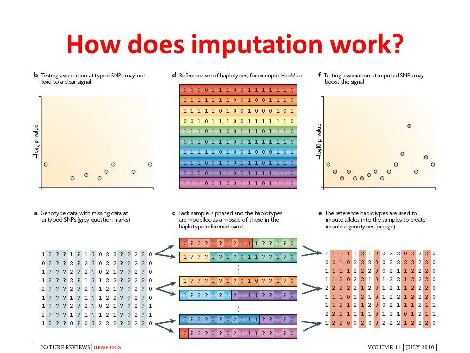How does imputation work?