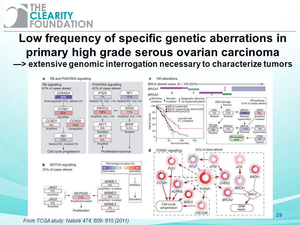 Low frequency of specific genetic aberrations in primary high grade serous ovarian carcinoma > extensive genomic interrogation necessary to characteri