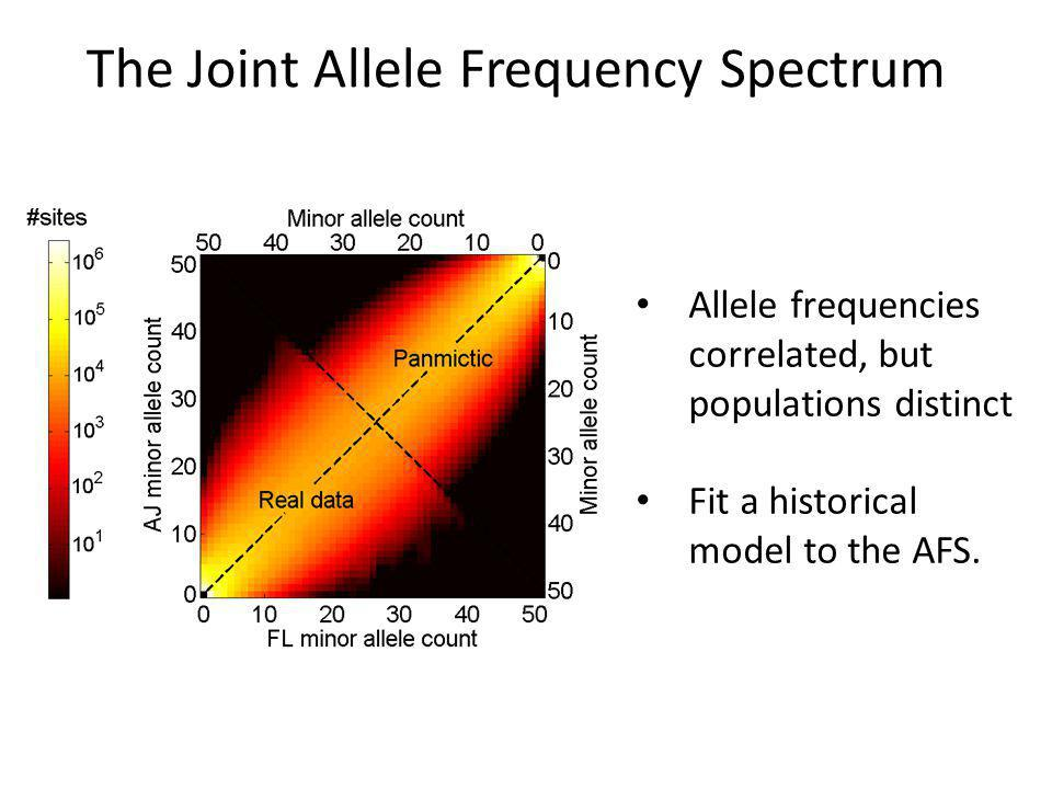 The Joint Allele Frequency Spectrum Allele frequencies correlated, but populations distinct Fit a historical model to the AFS.