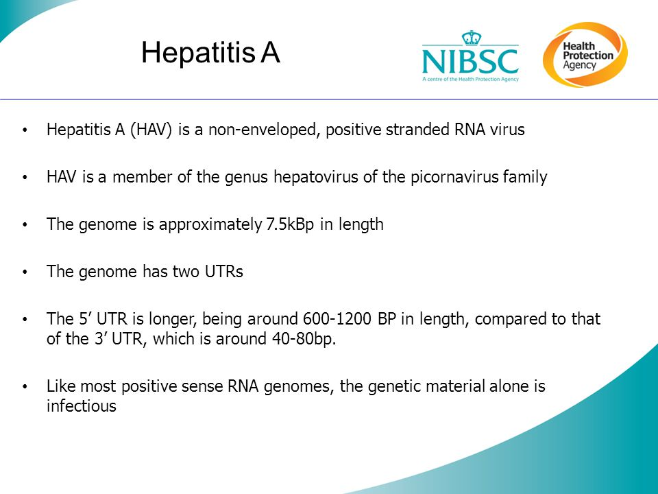 Hepatitis A Hepatitis A (HAV) is a non-enveloped, positive stranded RNA virus HAV is a member of the genus hepatovirus of the picornavirus family The genome is approximately 7.5kBp in length The genome has two UTRs The 5 UTR is longer, being around 600-1200 BP in length, compared to that of the 3 UTR, which is around 40-80bp.