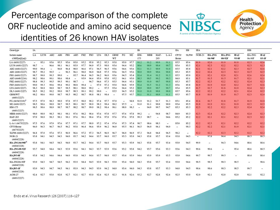 Percentage comparison of the complete ORF nucleotide and amino acid sequence identities of 26 known HAV isolates Endo et al.