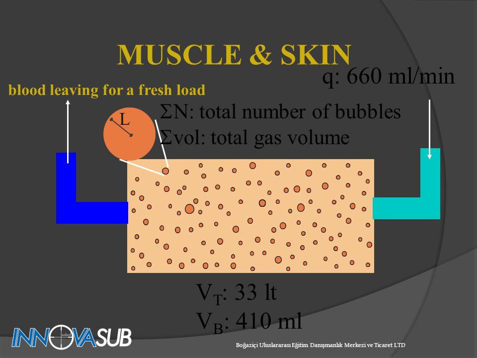 q: 660 ml/min V T : 33 lt V B : 410 ml N: total number of bubbles vol: total gas volume MUSCLE & SKIN Boğaziçi Uluslararası Eğitim Danışmanlık Merkezi ve Ticaret LTD