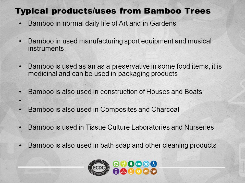 Typical products/uses from Bamboo Trees Bamboo in normal daily life of Art and in Gardens Bamboo in used manufacturing sport equipment and musical ins