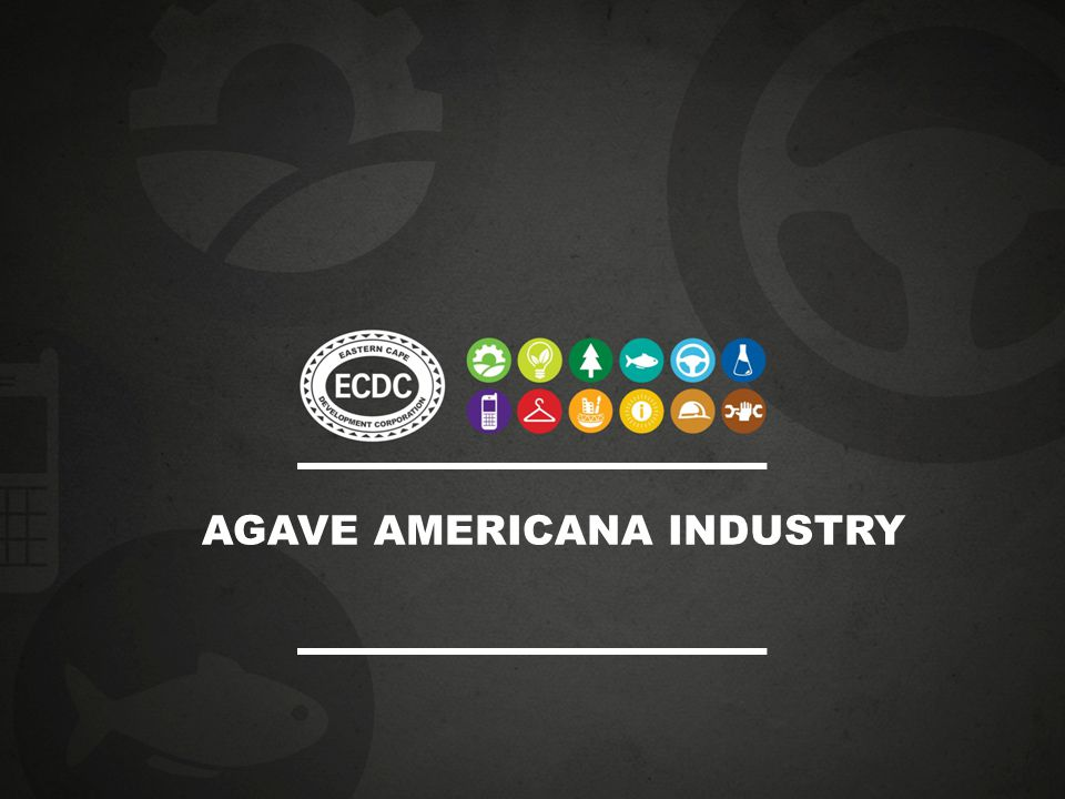 AGAVE AMERICANA INDUSTRY