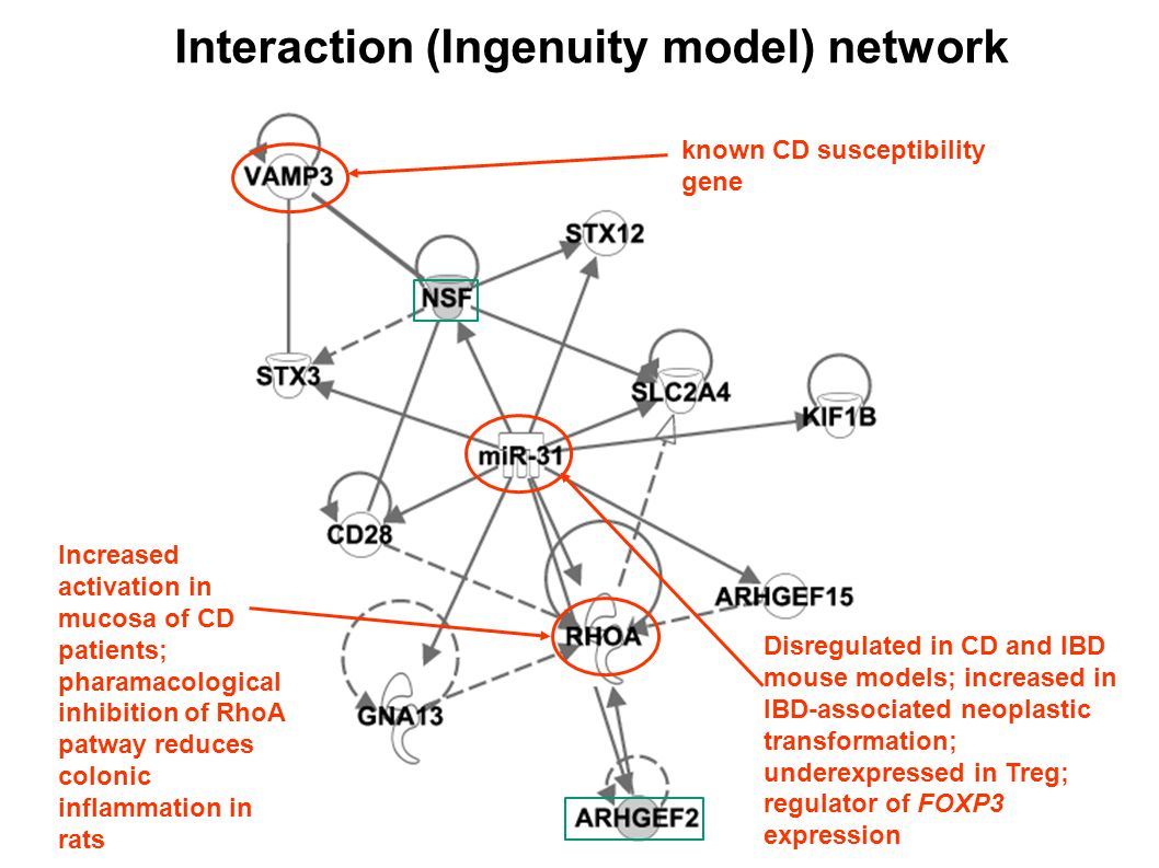 Interaction (Ingenuity model) network known CD susceptibility gene Disregulated in CD and IBD mouse models; increased in IBD-associated neoplastic transformation; underexpressed in Treg; regulator of FOXP3 expression Increased activation in mucosa of CD patients; pharamacological inhibition of RhoA patway reduces colonic inflammation in rats
