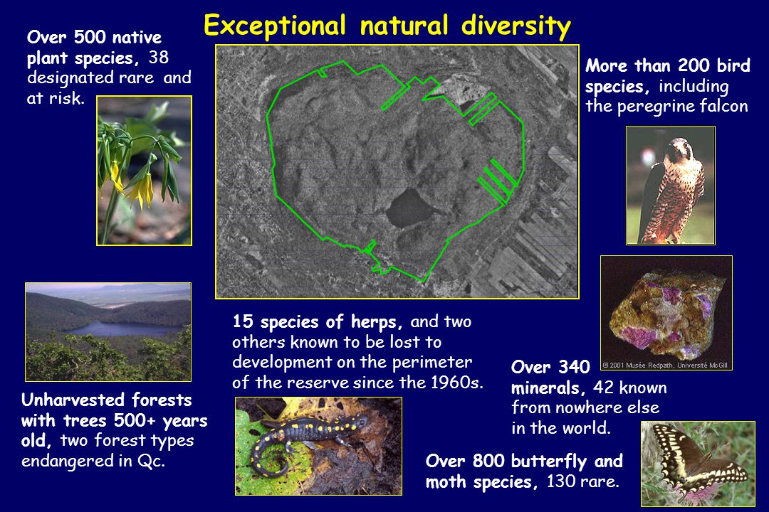 Exceptional natural diversity Over 500 native plant species, 38 designated rare and at risk.