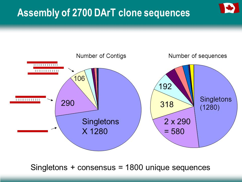 Assembly of 2700 DArT clone sequences Singletons + consensus = 1800 unique sequences Number of sequences Singletons (1280) 2 x 290 = 580 318 192 Number of Contigs Singletons X 1280 290 106