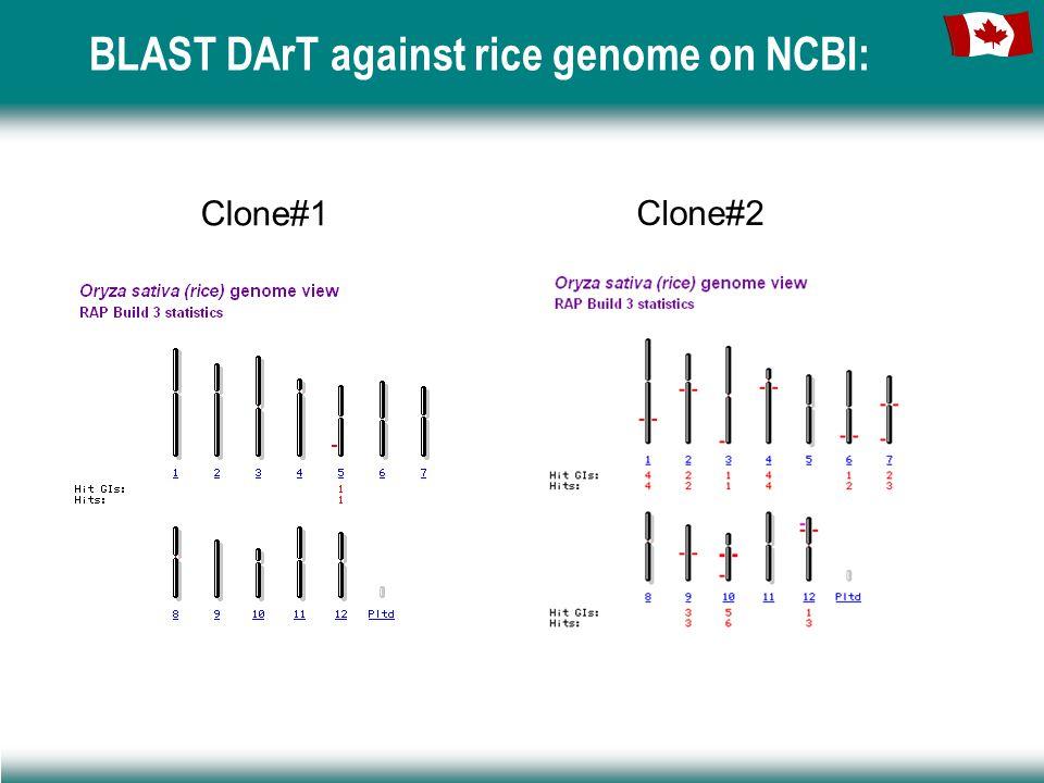 BLAST DArT against rice genome on NCBI: Clone#1 Clone#2