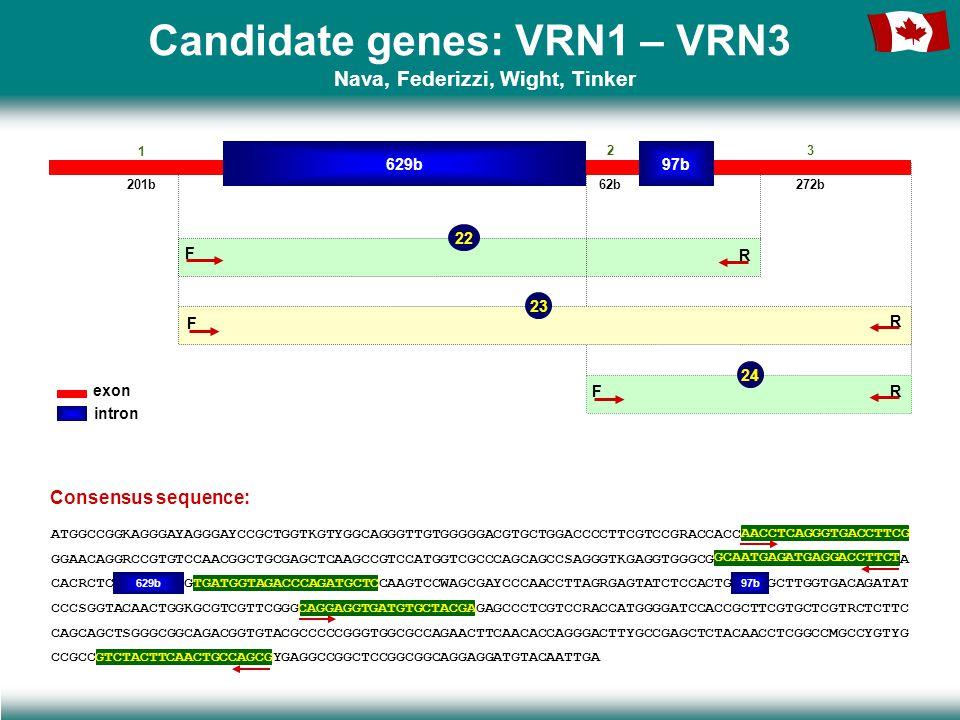 Candidate genes: VRN1 – VRN3 Nava, Federizzi, Wight, Tinker 22 24 629b97b 201b 1 23 62b272b F R F R 23 F R exon intron Consensus sequence: ATGGCCGGKAGGGAYAGGGAYCCGCTGGTKGTYGGCAGGGTTGTGGGGGACGTGCTGGACCCCTTCGTCCGRACCACCAACCTCAGGGTGACCTTCG GGAACAGGRCCGTGTCCAACGGCTGCGAGCTCAAGCCGTCCATGGTCGCCCAGCAGCCSAGGGTKGAGGTGGGCGGCAATGAGATGAGGACCTTCTA CACRCTC……………………GTGATGGTAGACCCAGATGCTCCAAGTCCWAGCGAYCCCAACCTTAGRGAGTATCTCCACTG…………GCTTGGTGACAGATAT CCCSGGTACAACTGGKGCGTCGTTCGGGCAGGAGGTGATGTGCTACGAGAGCCCTCGTCCRACCATGGGGATCCACCGCTTCGTGCTCGTRCTCTTC CAGCAGCTSGGGCGGCAGACGGTGTACGCCCCCGGGTGGCGCCAGAACTTCAACACCAGGGACTTYGCCGAGCTCTACAACCTCGGCCMGCCYGTYG CCGCCGTCTACTTCAACTGCCAGCGYGAGGCCGGCTCCGGCGGCAGGAGGATGTACAATTGA 629b97b AACCTCAGGGTGACCTTCG TGATGGTAGACCCAGATGCTC GCAATGAGATGAGGACCTTCT CAGGAGGTGATGTGCTACGA GTCTACTTCAACTGCCAGCG