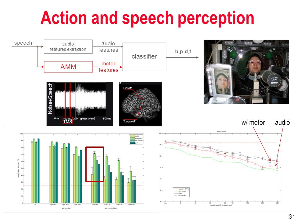 31 Action and speech perception w/ motoraudio