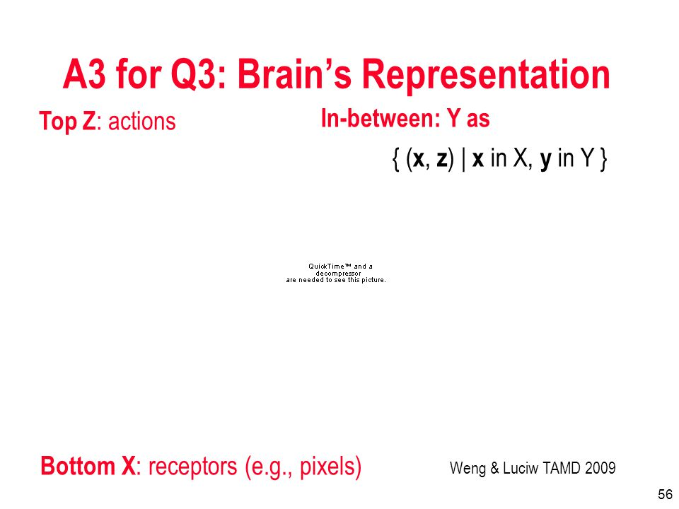 56 A3 for Q3: Brains Representation Weng & Luciw TAMD 2009 { ( x, z ) | x in X, y in Y } Top Z : actions Bottom X : receptors (e.g., pixels) In-between: Y as