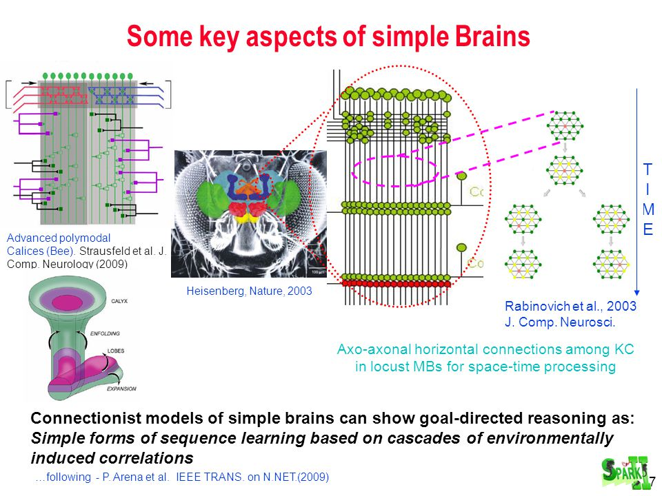 38 Mental Development and Representation Building through Motivated Learning Janusz A. Starzyk
