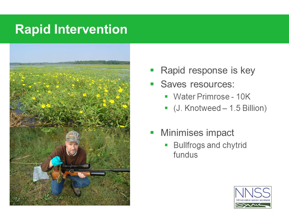 Rapid Intervention Rapid response is key Saves resources: Water Primrose - 10K (J.