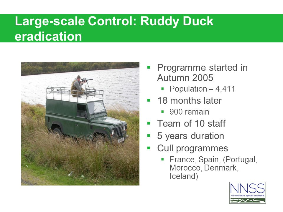Large-scale Control: Ruddy Duck eradication Programme started in Autumn 2005 Population – 4,411 18 months later 900 remain Team of 10 staff 5 years du