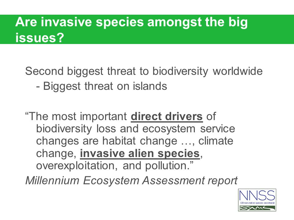 Are invasive species amongst the big issues? Second biggest threat to biodiversity worldwide - Biggest threat on islands The most important direct dri