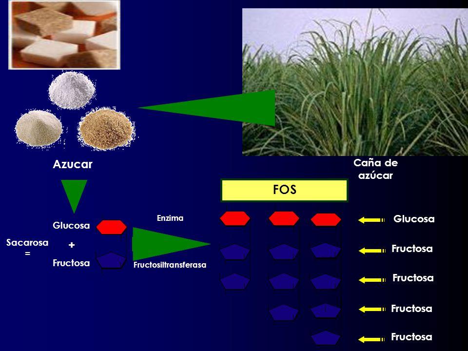 Azucar Caña de azúcar Enzima Fructosiltransferasa Glucosa Fructosa FOS Glucosa + Fructosa Sacarosa =