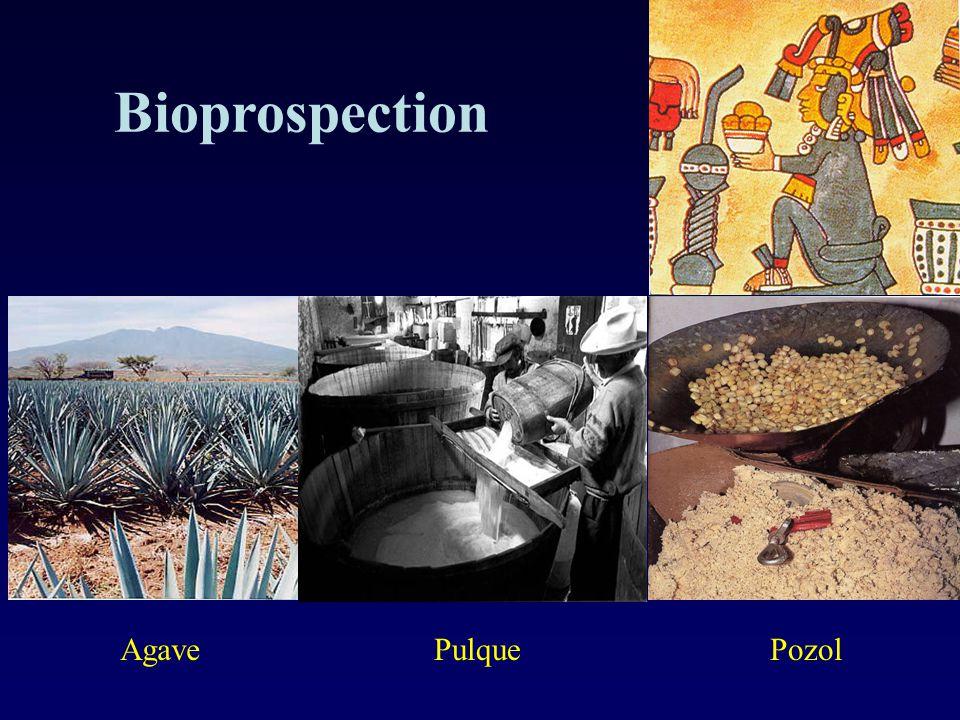 Bioprospection AgavePozolPulque