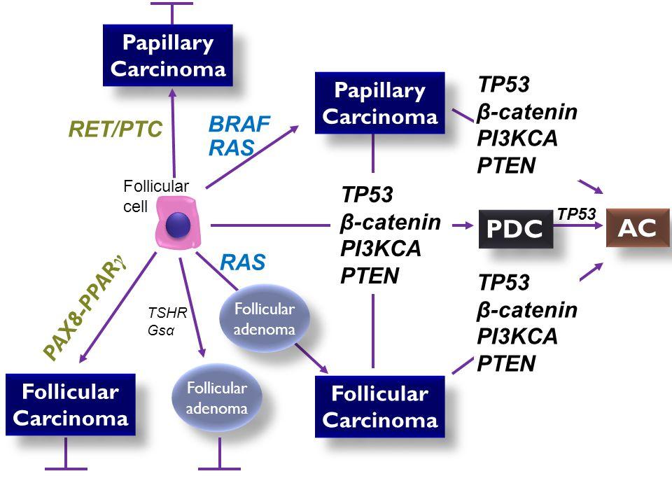 BRAF mutations BRAF is a serine- threonine kinase.