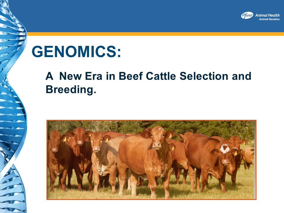 GENOMICS: A New Era in Beef Cattle Selection and Breeding.