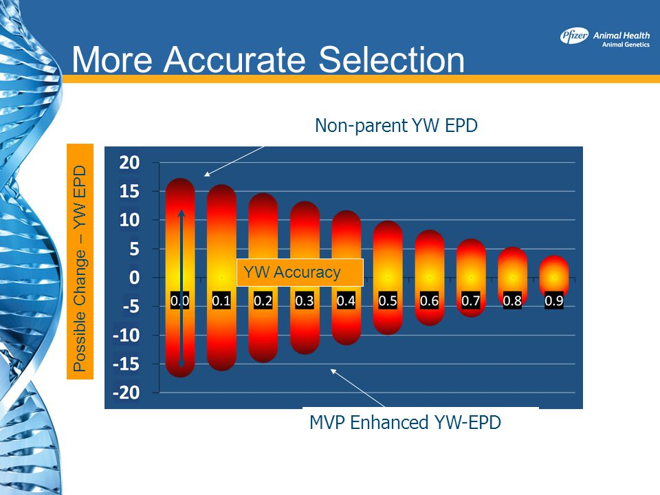 More Accurate Selection Non-parent YW EPD MVP Enhanced YW-EPD Possible Change – YW EPD YW Accuracy