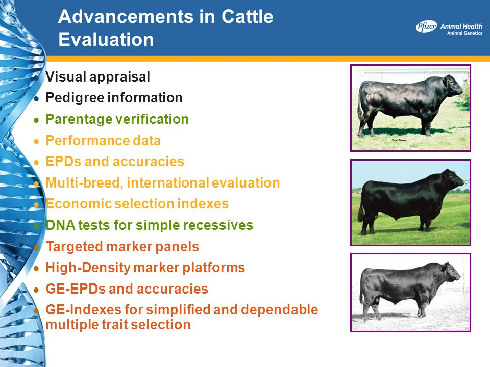 Advancements in Cattle Evaluation Visual appraisal Pedigree information Parentage verification Performance data EPDs and accuracies Multi-breed, inter