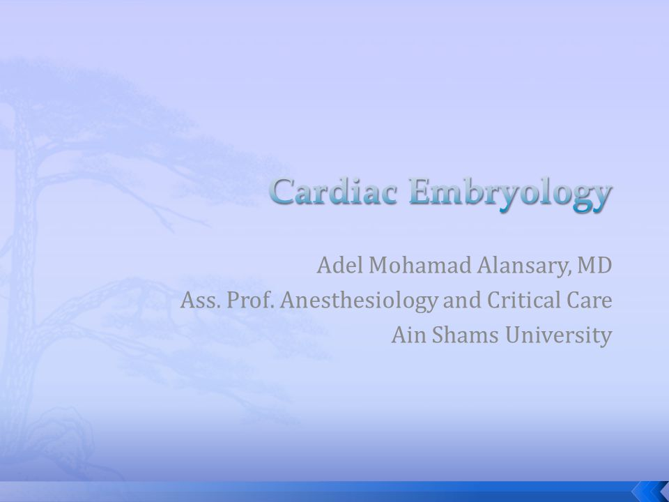 Adel Mohamad Alansary, MD Ass. Prof. Anesthesiology and Critical Care Ain Shams University