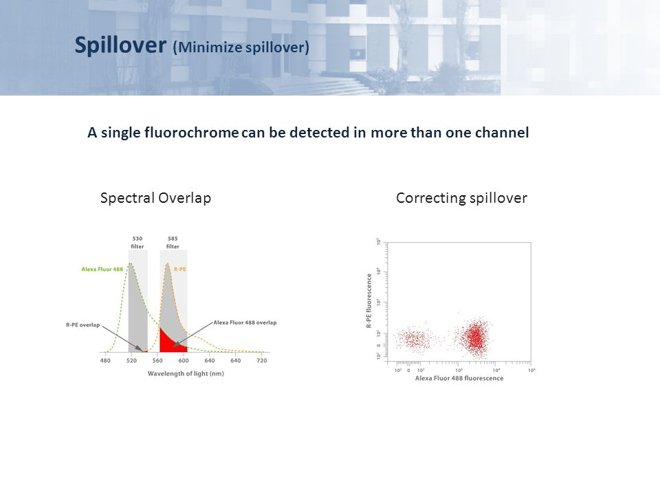 Spillover (Minimize spillover) A single fluorochrome can be detected in more than one channel Spectral OverlapCorrecting spillover