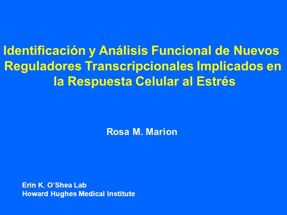 Identificación y Análisis Funcional de Nuevos Reguladores Transcripcionales Implicados en la Respuesta Celular al Estrés Rosa M.