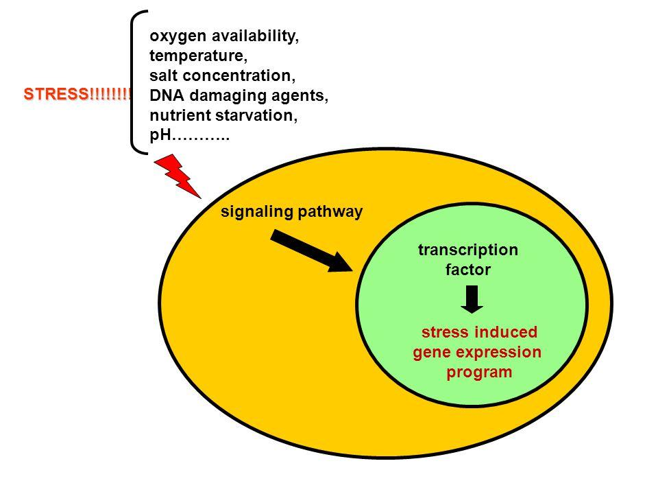 Regulation of ribosomal protein gene expression 2.