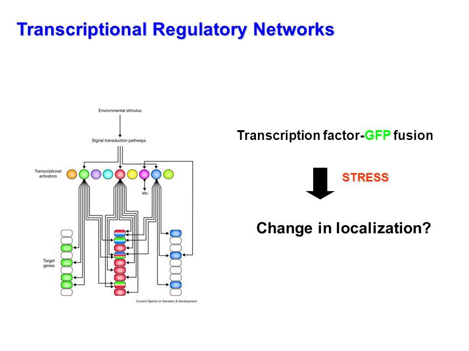 CtrlRapamycin ONOFF Powers T.and Walter P. Mol. Biol.