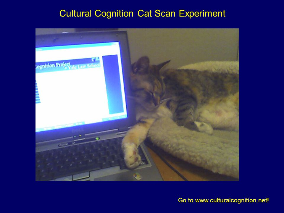 Cultural Cognition Cat Scan Experiment Go to www.culturalcognition.net!