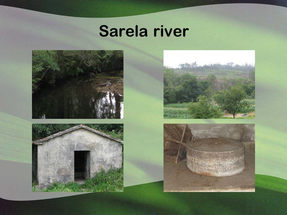 Sarela river