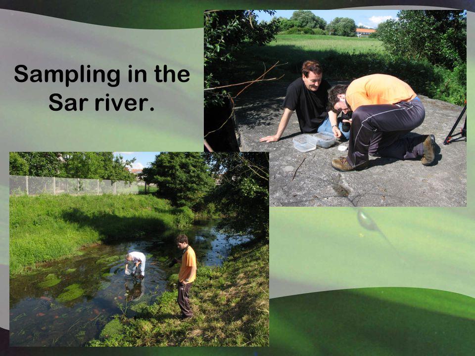 Sampling in the Sar river.