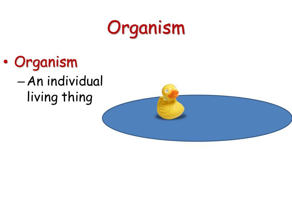 Organism Organism Organism – An individual living thing