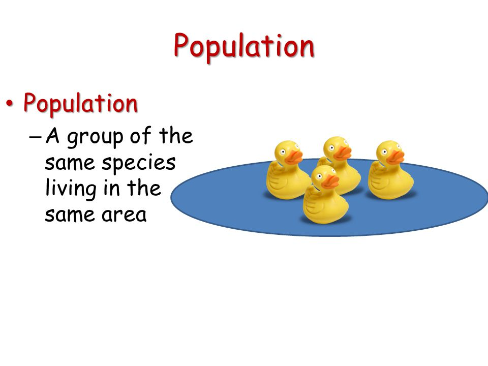 Population Population Population – A group of the same species living in the same area