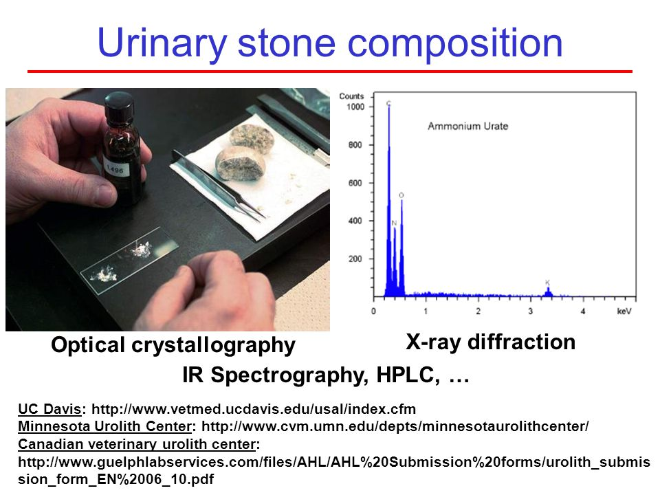 Urinary stone composition Optical crystallography X-ray diffraction IR Spectrography, HPLC, … UC Davis: http://www.vetmed.ucdavis.edu/usal/index.cfm M