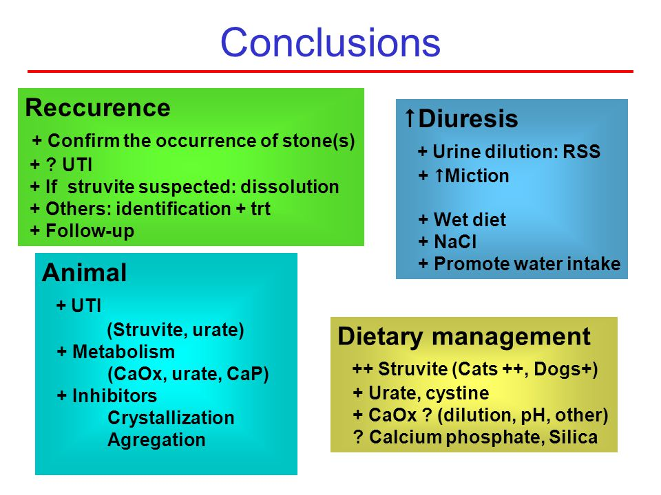 Conclusions Diuresis + Urine dilution: RSS + Miction + Wet diet + NaCl + Promote water intake Dietary management ++ Struvite (Cats ++, Dogs+) + Urate,