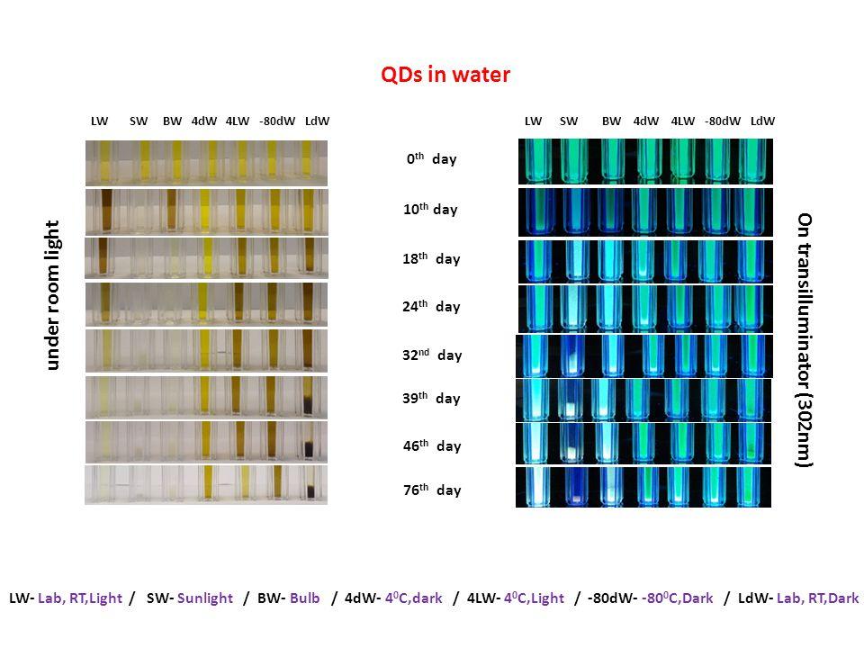 LW- Lab, RT,Light / SW- Sunlight / BW- Bulb / 4dW- 4 0 C,dark / 4LW- 4 0 C,Light / -80dW- -80 0 C,Dark / LdW- Lab, RT,Dark QDs in water LW SW BW 4dW 4LW -80dW LdW 0 th day 18 th day 24 th day 32 nd day 39 th day 46 th day 76 th day 10 th day under room light On transilluminator (302nm)