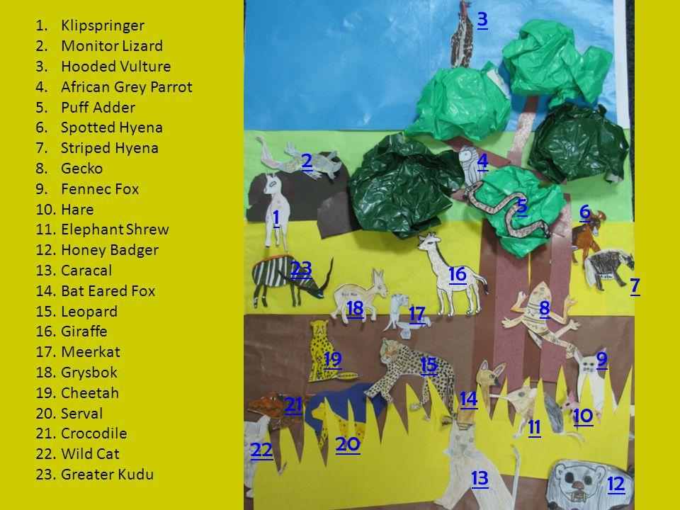 1 2 3 4 5 6 7 8 9 10 11 12 13 14 15 16 17 18 19 20 21 22 23 1.Klipspringer 2.Monitor Lizard 3.Hooded Vulture 4.African Grey Parrot 5.Puff Adder 6.Spotted Hyena 7.Striped Hyena 8.Gecko 9.Fennec Fox 10.Hare 11.Elephant Shrew 12.Honey Badger 13.Caracal 14.Bat Eared Fox 15.Leopard 16.Giraffe 17.Meerkat 18.Grysbok 19.Cheetah 20.Serval 21.Crocodile 22.Wild Cat 23.Greater Kudu