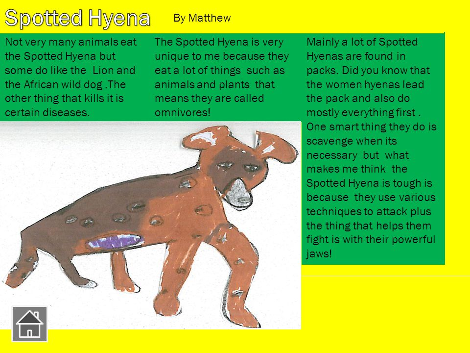Mainly a lot of Spotted Hyenas are found in packs.