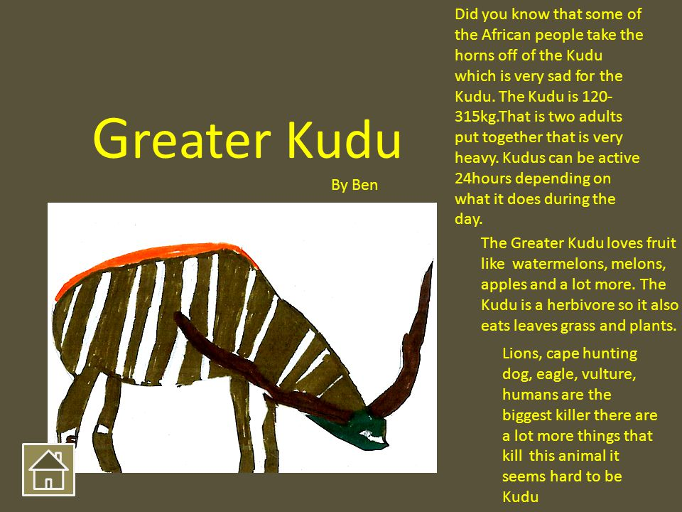 The Greater Kudu loves fruit like watermelons, melons, apples and a lot more. The Kudu is a herbivore so it also eats leaves grass and plants. Did you