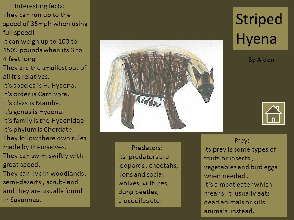Striped Hyena Interesting facts: They can run up to the speed of 35mph when using full speed.