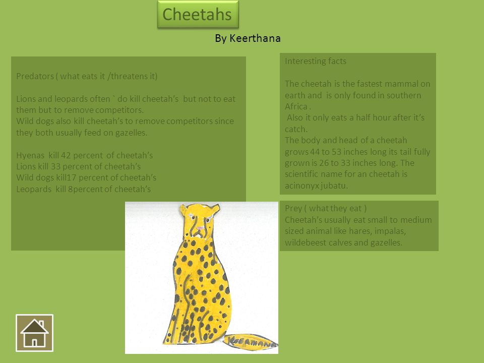 Interesting facts The cheetah is the fastest mammal on earth and is only found in southern Africa. Also it only eats a half hour after its catch. The
