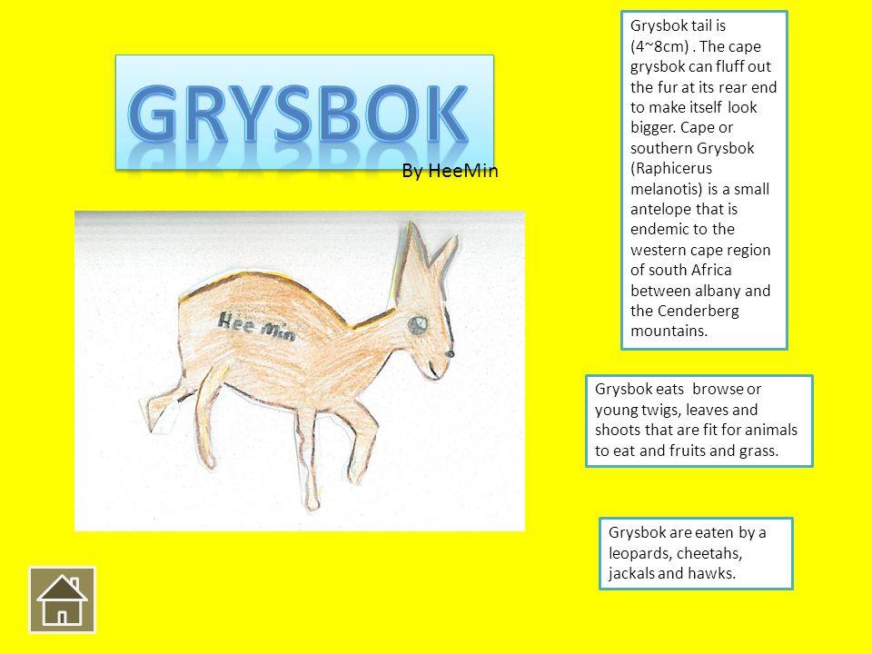 Grysbok tail is (4~8cm).