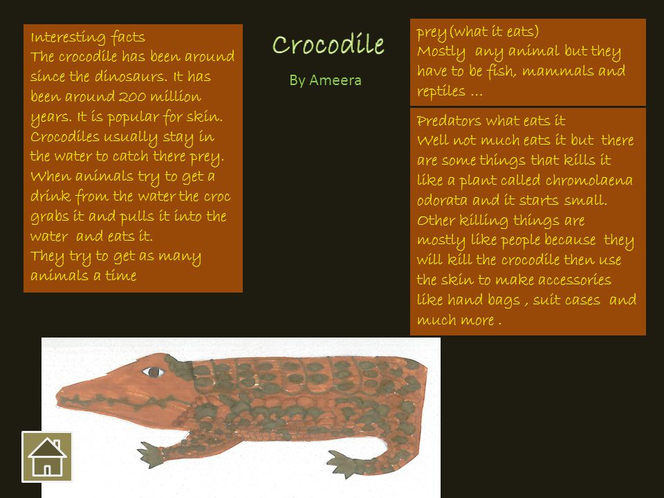 Interesting facts The crocodile has been around since the dinosaurs. It has been around 200 million years. It is popular for skin. Crocodiles usually