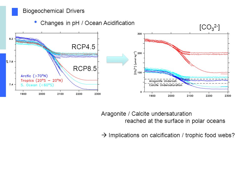 Biogeochemical Drivers Changes in pH / Ocean Acidification RCP4.5 RCP8.5 Aragonite / Calcite undersaturation reached at the surface in polar oceans Implications on calcification / trophic food webs.