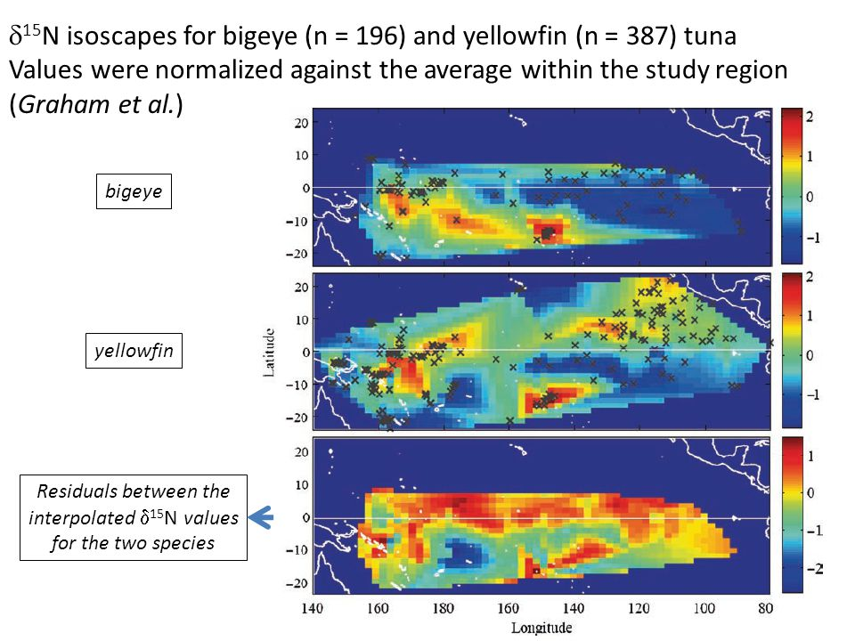 15 N isoscapes for bigeye (n = 196) and yellowfin (n = 387) tuna Values were normalized against the average within the study region (Graham et al.) Residuals between the interpolated 15 N values for the two species bigeye yellowfin